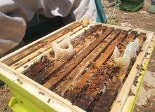 عسل طبيعي بذمه