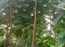 Natural and Artificial Plants for sale directly from the owner