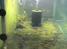 حوض سمك مع الميز للبيع