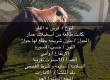 Alfalo horse