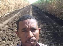 مهندس زراعي
