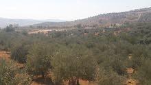 أرض 1800م للبيع في جرش قرية الكتة حوض الزبلية