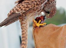 توصيل ونقل وشحن حيوانات اليفة وطيور