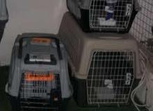 اقفاص للكلاب ناقل للكلاب مع الساحب متوفر جميع الاحجام ويصلح لكل انواع الكلاب الضخم او الصغير
