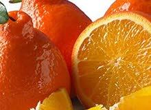 تأسيس بساتين الفاكهة