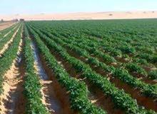 ارض زراعيه للبيع في الفيوم 45كم من الهرم