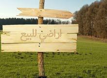 للبيع ارض زراعيه بركاء النعمان