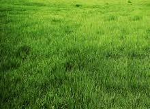 أرض للبيع 1000م، في الطبقة تبعد 20م عن ظهير،مربعة الشكل،تصنيف(أ) خاص
