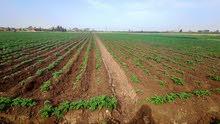 للاستثمار في ارض زراعية 14 قيراط