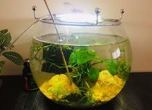 Planted Aquarium with shrimps