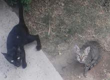 مطلوب قطه للتبرع