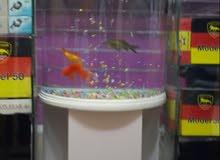 حوض سمك شبه جديد