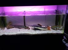 Big size aquarium with stand fish and turtle