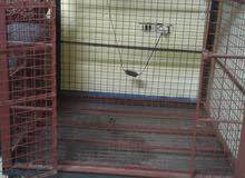 بوكس كلب متر  حديد قوى