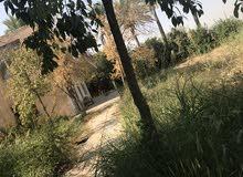بستان على نهر دجله