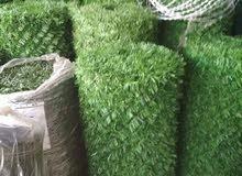 عشب جداري