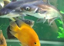 حوض سمك اجنبي مع السمك
