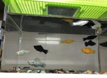 Aquaruim 11 (breeding) Fish For Sale