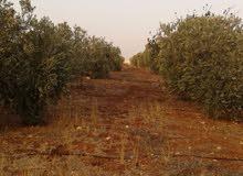 مزرعة للبيع - على طريق جرش الزرقاء