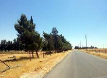 قطعة أرض مميزة في منطقة الطنيب بجانب جامعة الإسراء مباشرة على طريق المطار للبيـــع