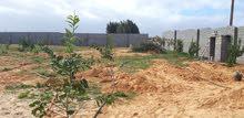 ارض2000م واجهتين مسورة مشجرة بالكامل ري تقطير تاجوراء سيرتي