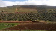 مزرعه 27 دونم  بها نبع للبيع في (دحل)  شرق جرش