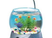 betta fish light tank and food حوض لسمكه بيتا الجميله مع الاكل