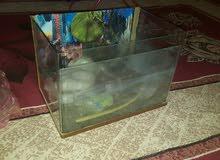 حوض سمك 40×20