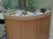 حوض سمك على زاويه