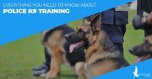 Dog Training مدرب كلاب طاعه بارخص الاسعار