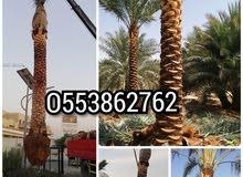 JAZEERA LANDSCAPE & HARDSCAPE DUBAI-O559427997