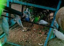 طيور مشكله اكتر من 5 أنواع مع ارخس مبلغ