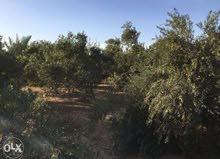 للبيع مزرعة 10فدان مزروعة بالكامل بأشجار- مصر