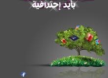 graphic designer_ social media _freelancer _ logo