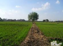 أرض زراعية بطريق الإسكندرية الصحراوي للبيع