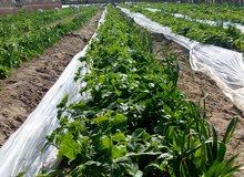 أرض زراعيه منتجه تزرع كل المحاصيل كفرالشيخ