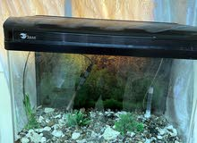 fish tank big size