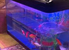 حوض سمك كامل +10سمكات  حجم كبير