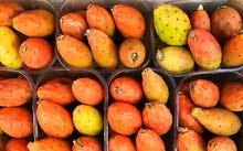 فاكهة التين الشوكي طول الموسم و ليس فقط الصيف