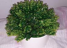 plantes artificielle