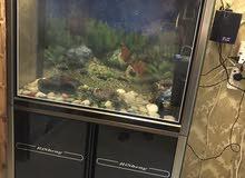 حوض سمك للبيع مع معداته