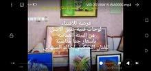 لوحات فنية لفنانين عمانيين