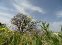ارض للبيع في اجمل مناطق الغور (الشونة الجنوبية) , مساحة الارض 86,000م