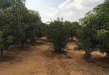 - ارض زراعيه للبيع 55 فدان قابله للتجزئه