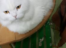 قطط للتبنى