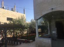 عين الباشا - اسكان قاقيش بجانب مسجد الفاروق