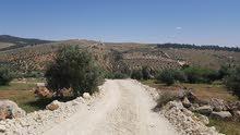 اراضي المفرق - قرية نادرة - حوض الطوشة - من المالك مباشرة - بسعر مميز جدا