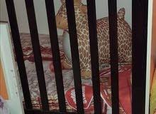 للبيع دار نوم اطفال بي تلاثه سراير كما موضح في صور .ودولاب بي تلاثه ابواب وتلاته ادراج