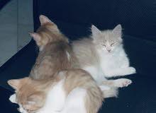 mixed cats