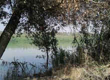 قطعة أرض زراعي على الشط (نهر دجلة)